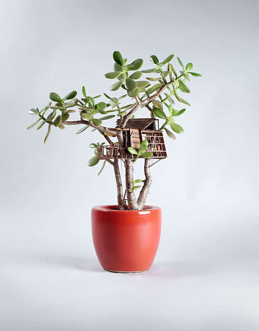 miniature-treehouse-houseplants-somewhere-small-jedediah-corwyn-voltz-6
